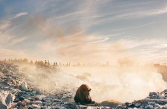 orso rifiuti sfridoo